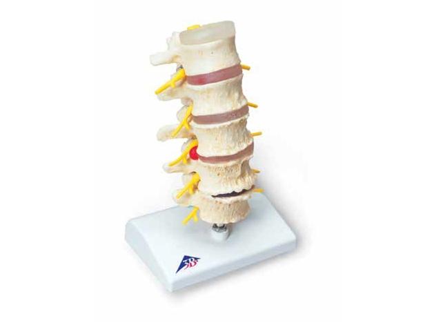 Figura para Demonstração de Postura - Mw19007